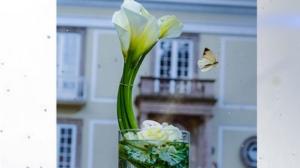 reflejo de alcatraces flores arreglo