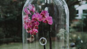orquidea de capelo
